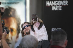 Crystal the monkey (kjdrill) Tags: california justin usa mike zach movie ed paul losangeles tyson ken bradley hollywood cooper premiere blvd helms 1203 giamatti bartha jeong galifiankis hangoverpart2 monkeythailandfilmcomedyfunny