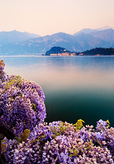 Italy - Lake Como: Smell of Spring (John & Tina Reid) Tags: italy lakecomo italianalps afterglow travelphotography italianlakes johnreid mountainlight tinareid wwwnomadicvisioncom