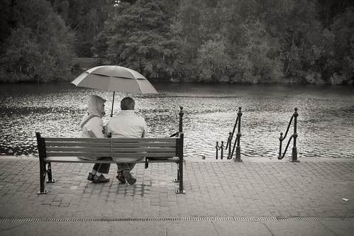 409/1000 - Raining on the groves by Mark Carline