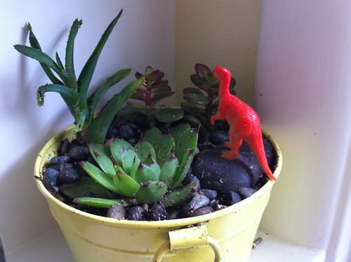 my little succulent garden + dinosaur
