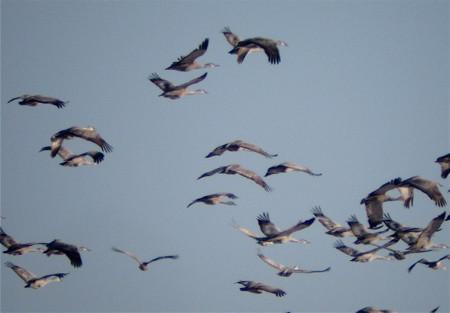 legless cranes