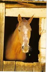 cavalo na Moldura
