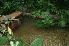 IMG_4732 (mhaw) Tags: flowers flower water garden washingtondc dc indoors botanicalgarden natio nationalbotanicalgarden