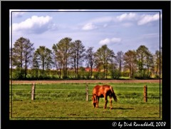 Landscape with Horse (~~Dirk~~) Tags: blue sky horse green raw dirk hdr breathtaking shiningstar orton hdri photomatix amazingshot imagequality singleraw envyofflickr betterthangood theperfectphotographer dragongoldaward siedenburg dirkrauschkolb