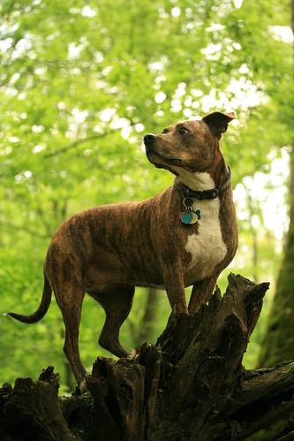 Peanut on a log