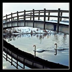 2 x 2 (Dieter Drescher) Tags: bridge schnee winter 2 snow reflection water swan wasser swans brcke schwan ise schwne gifhorn dieterdrescher