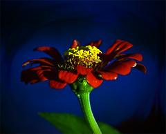 A Swirly (edwardleger) Tags: light shadow flower nature louisiana smudge swirl 2008 theunforgettablepictures edwardleger exquisiteimage edwardnleger