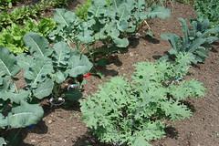 dad's garden 5