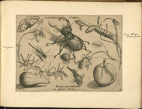 Archetypa studiaque patris - Joris Hoefnagel (1592) f