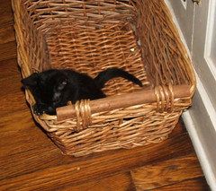 in a basket (jennbennstar) Tags: our kitty beloved