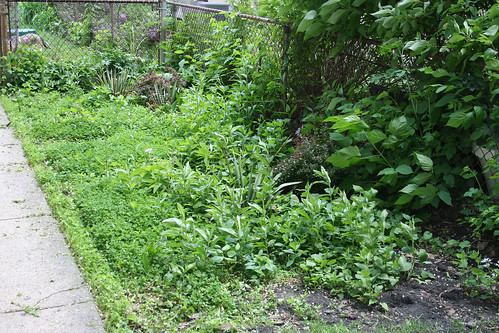 Side Garden (Overtaken by Weeds)