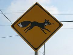 ...like a fox