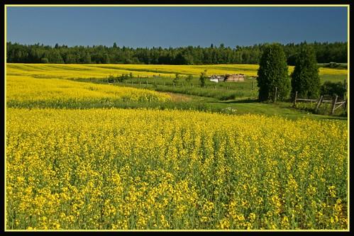 Je vois la vie en jaune !