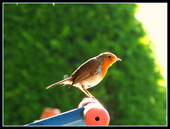 bird (stefanskimariusz ) Tags: windows color bird woodland garden hotel photo arms natural zoom kodak lord crew dew blanchland supershot