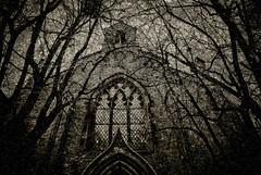 Etching of Andrew (gothicburg) Tags: trees church sepia göteborg etching sweden gothenburg standrews sverige rosenlund creativephotography spittinshells spetsbågefönster spitzbogenfenster flamboyantarch
