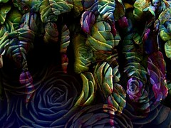 succulents on succulents (msdonnalee) Tags: plant planta photomanipulation succulent  gimp overlay digitalpainting layer plantlife botanicals fineartphotos  donnacleveland photosbydonnacleveland