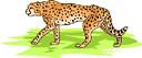 leopard (3doel82) Tags: fish bird animals insect gambar koleksi ikan belajar burung binatang carnivora serangga mamalia amphibi