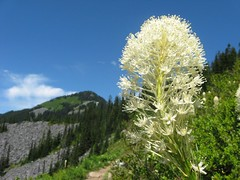 Beargrass and Defiance