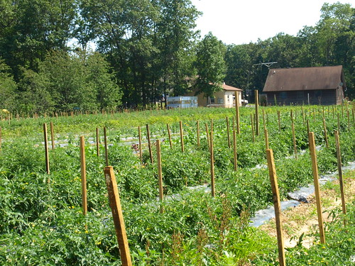 view of vegetable garden