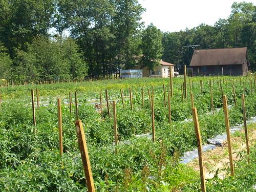 view of vegetable garden