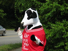 Chick-Fil-A Cow in Chapel Hill