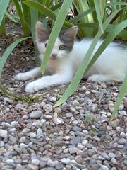 Minina (dushko_djr) Tags: cats felini gatti mici