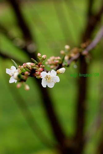 dans early blooms