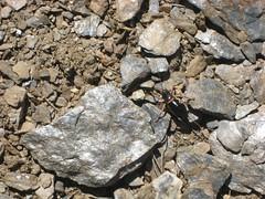 What the heck?!? A beetlehopper!