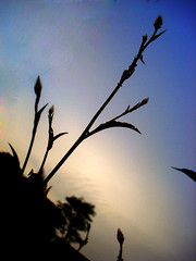 reaching the sky (nupur-m) Tags: loveit alwayscomment5 neverflood