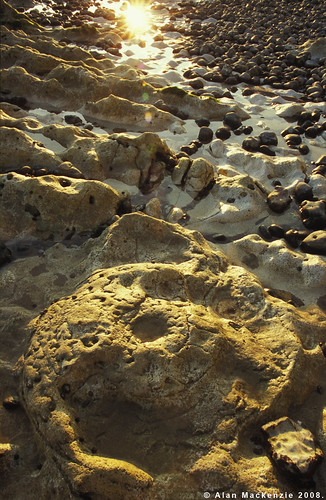 peacehaven ammonite 2