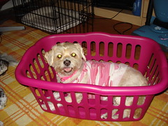 pink dog cute training puppy bed cage cooper rosen blondie crate cratetraining