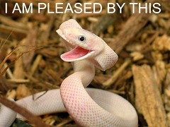 snake-am-pleased-by-this (DiscoWeasel) Tags: pet pets white smile animal by this funny snake lol misc internet humor meme pleased noob wastesometime