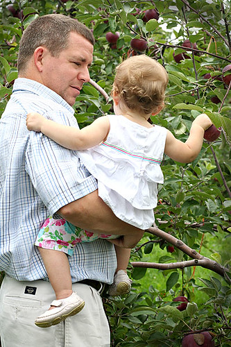 Daddy and his girl picking apples