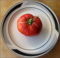 Tomato, 2008