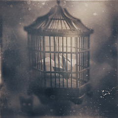 The Hollow (panic-embryo) Tags: bird birdcage sepia cat photomanipulation dark origami moody dream eerie hunger series topf100 hollow panicembryo artlibre graphicnovelexperiments obstaculum imagofabulae