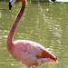 Botanical Gardens and Zoo 137