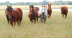 A Perfect Audience (fromky) Tags: horses usa animal rural october texas tx 2008 walkercounty impressedbeauty dsc2467 betterthangood explorewinnersoftheworld