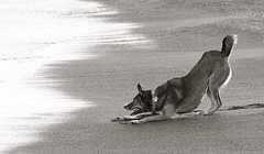 Roxie (2) (Piotr Organa) Tags: portrait bw dog pet white toronto canada black cute beach animal aplusphoto gnneniyis