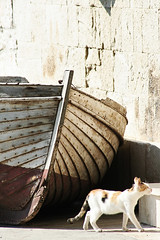 The inevitable end (Komiza, Vis island) (Load.Error) Tags: travel cats canon island boat europe mediterranean croatia vis adriatic komiza