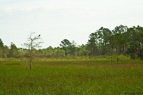 CorkscrewSwamp2