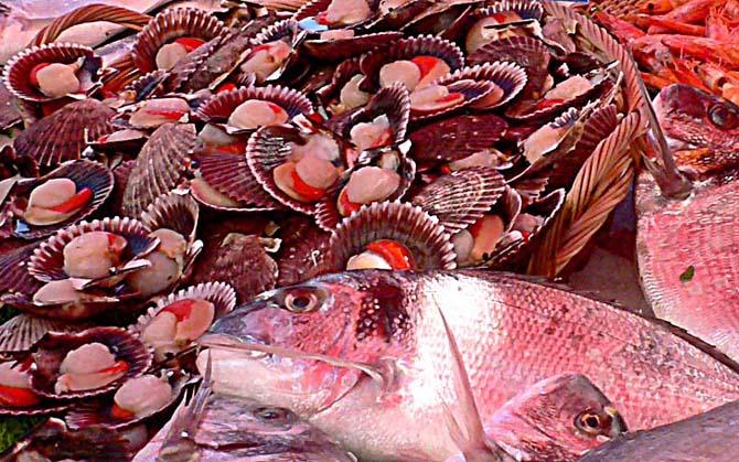 fish-cu-s-70535