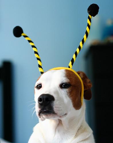 Lucy Bumblebee 4
