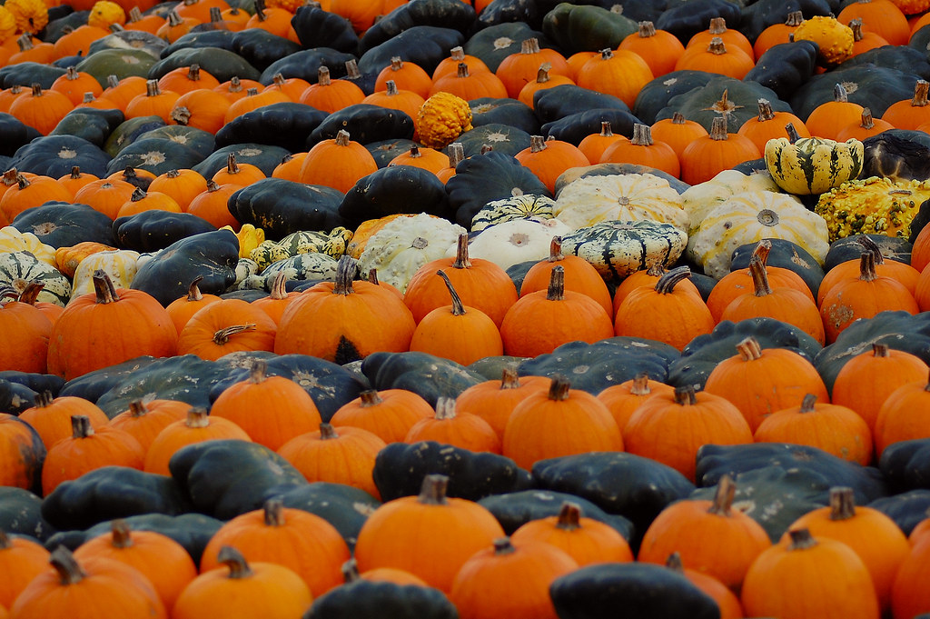 3003941802 2ed6538395 b Photo Essay: Incredible Pictures of Pumpkin Patches