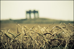 Bokeh in the wheat field (manlio_k) Tags: monument field vintage scotland dof bokeh wheat manlio stonehaven castagna manliocastagna manliok
