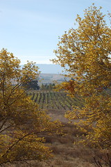 Livermore Valley (sanbeiji) Tags: california vineyard hills winery grapes conference eastbay pastoral livermore blueribbonwinner interlab interlab2008