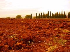 DSC05334 (divulgando foto) Tags: uva vigne vino terrano olio carso goriziano