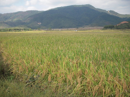 The paddy land view - 02