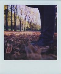 100, autunno (...cave) Tags: autumn foglie polaroid shoes legs talon 600 leafs autunno casalecchio spirit600cl
