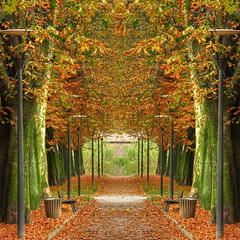 Mirrored path (Mike G. K.) Tags: park autumn trees orange plants france fall leaves photoshop bench arch path symmetry foliage strasbourg alsace join blended mirrored hdr merge blending citadelpark tonemapped tonemapping photmatix mirroredpath parkdelacitadelle mikegk:gettyimages=submitted