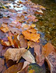 P1000181B (stephencjameson) Tags: fall atumn stephencjameson